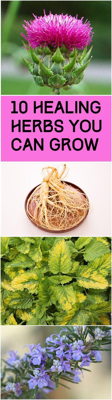 10 Healing Herbs You Can Grow