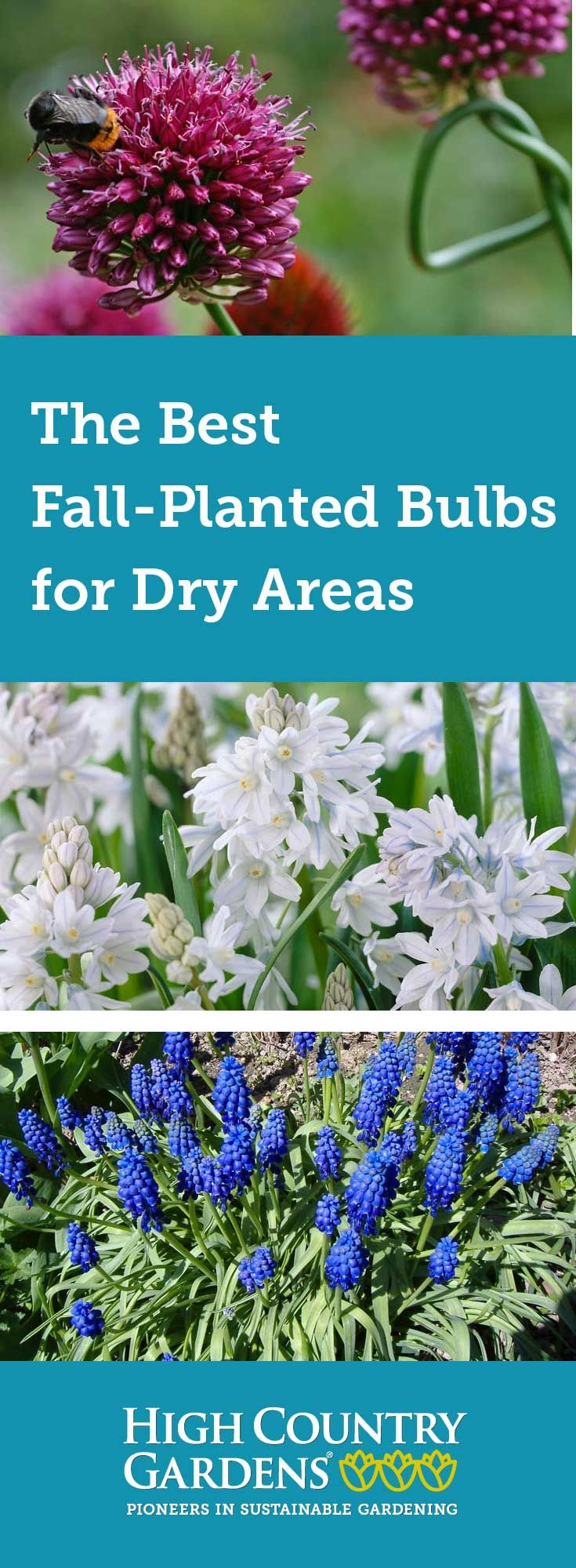 Best fallplanted bulbs for dry areas high country