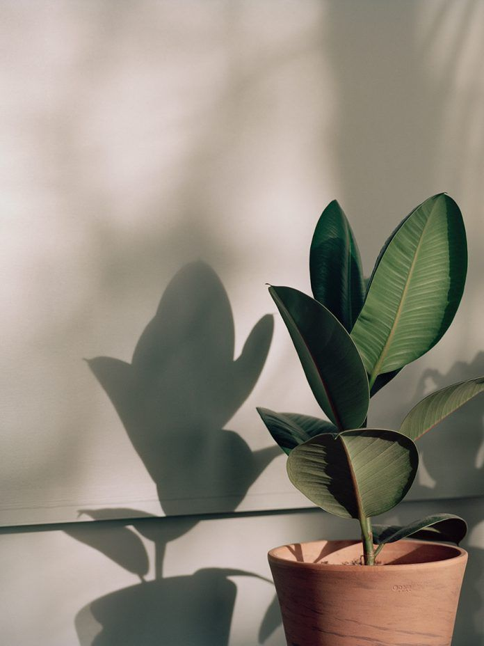 Refettorio Felix Plant wallpaper, Plant aesthetic, Plants
