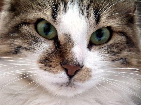 Je vis avec une dizaine de chats autour de moi, alors quoi de plus normal qu'un board special chats. Enjoy ♥ Eric, http://eric-lequien-esposti.com