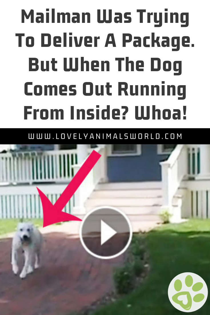 Mailman Was Trying To Deliver A Package But When The Dog Comes Out Running From Inside Whoa Dogs Doglovers Funny Cat Gifts Cute Animal Videos Cat Vs Dog