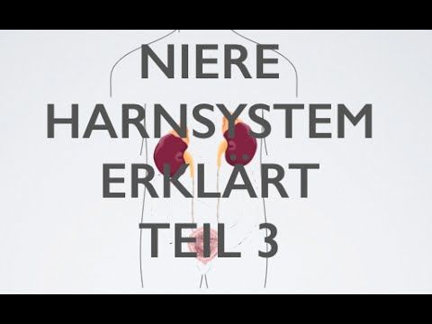 Niere Harn-System Teil 3 | Medizin Grundlagen - YouTube | Anatomie ...