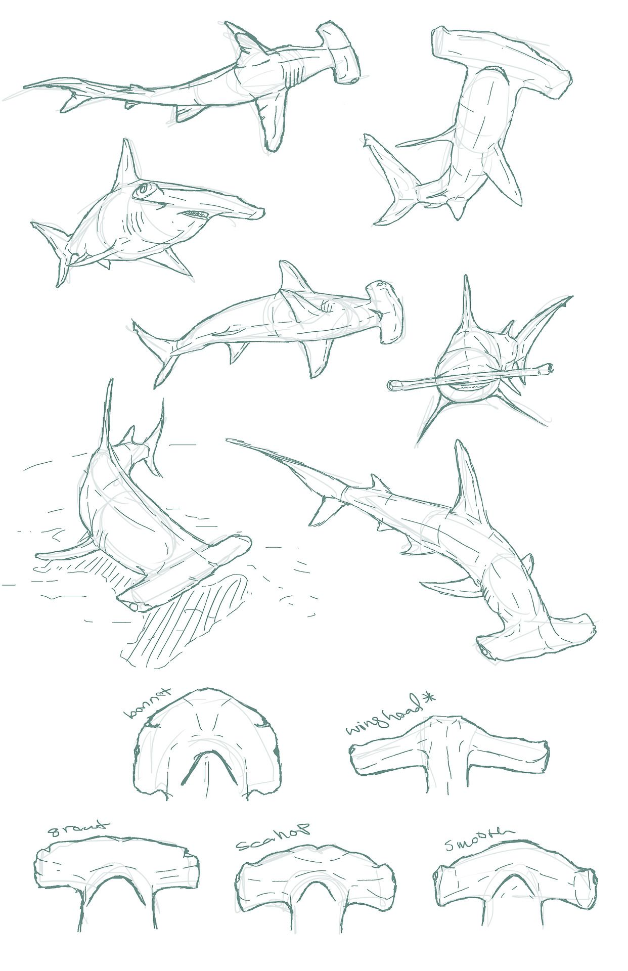 edemoss: Hammerhead sketches I did for a piece...   Tiburones ...