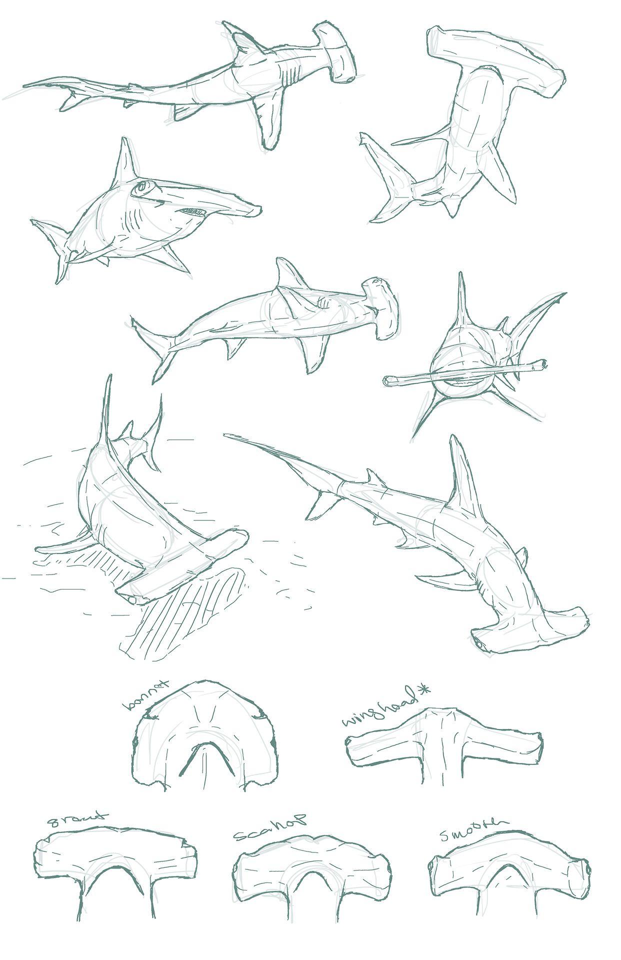 edemoss: Hammerhead sketches I did for a piece... | Tiburones, León ...