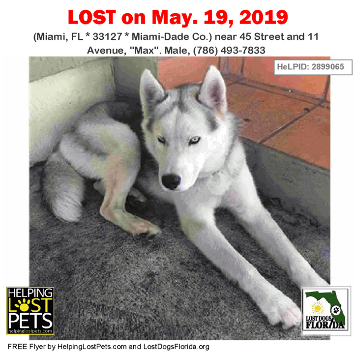 Lost Dog Have You Seen Max Lostdog Max Miami 45 Street 11 Avenue Max Male 786 493 7833 Fl 33127 Miamidade Co Losing A Dog Dogs Losing A Pet