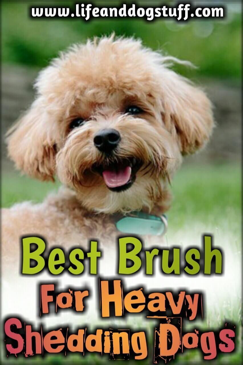 Best Brush For Heavy Shedding Dog Fluffy S Reviews Dog Shedding Dogs Deshedding Dog