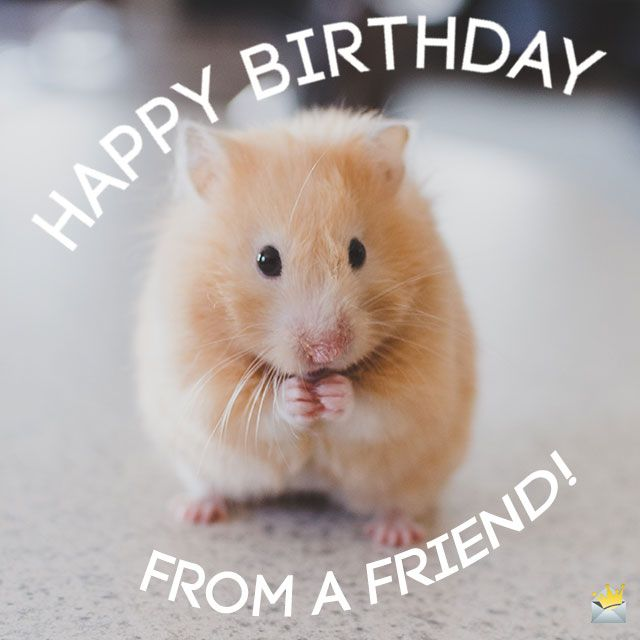 Cute Animals and Funny Happy Birthday Wishes | Happy ...
