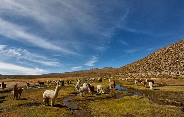 Conocer personas bolivia