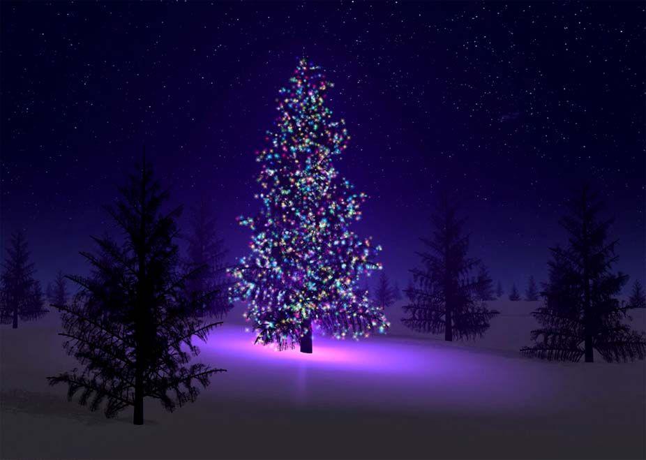 Arbol de navidad buscar con google precios arbre de for Buscar fondos de pantalla