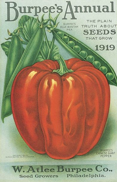 My grandmother loved to garden, and she ordered most of her seeds from Burpee's. I remember the beautiful seed catalogs from the 60s & 70s.