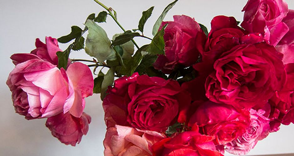 4 Steps To Fix Bent Neck Roses The Bouqs Co Blog Wilted Flowers Wilted Rose Rose