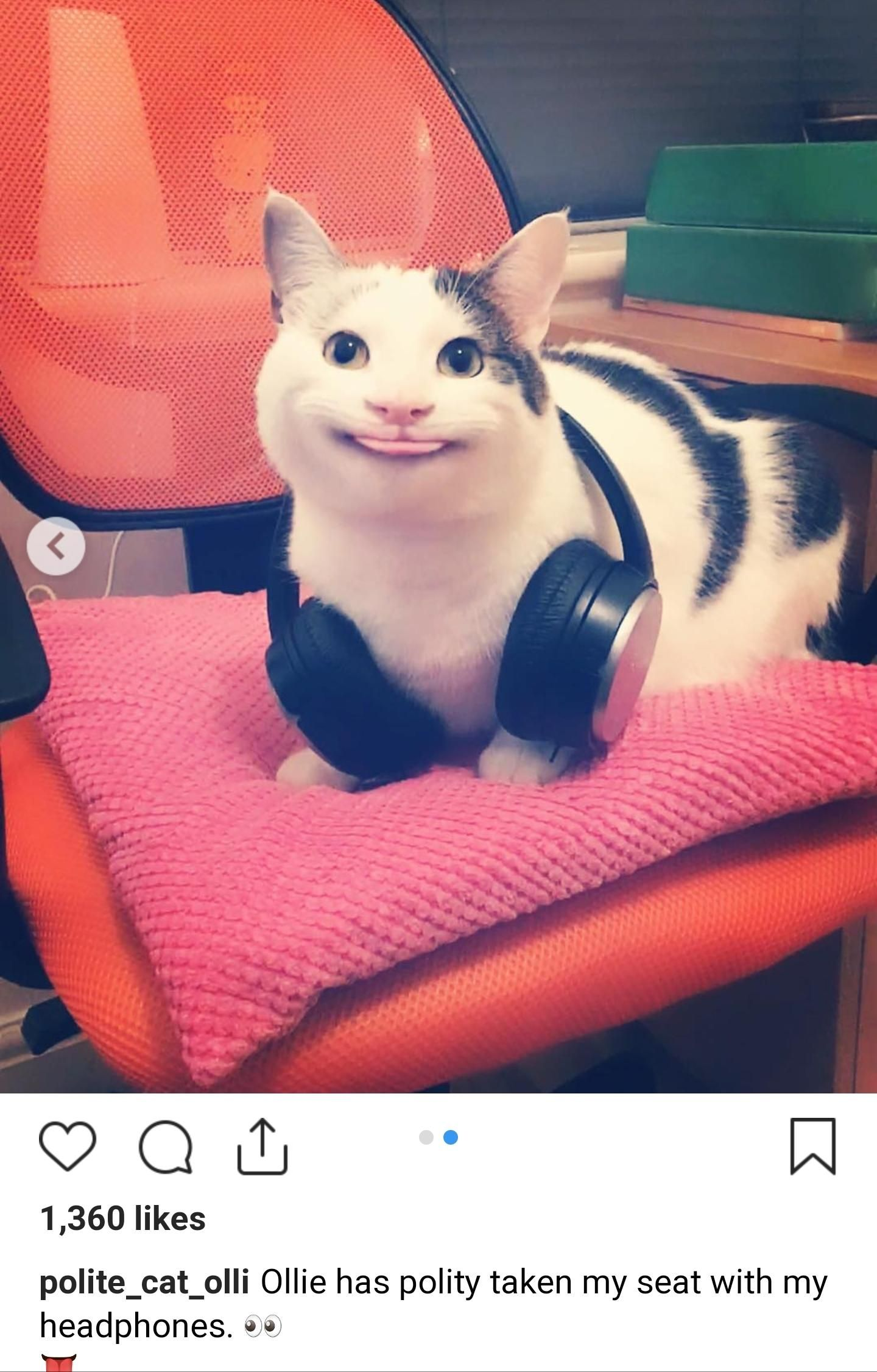 Polite Cat Olli Blep! His official Instagram is shown at ...