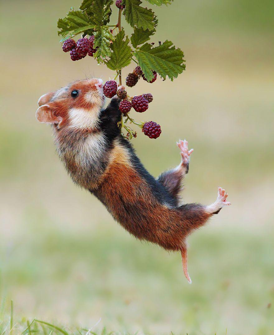 Ce photographe capture des scènes amusantes dans le quotidien des animaux sauvages