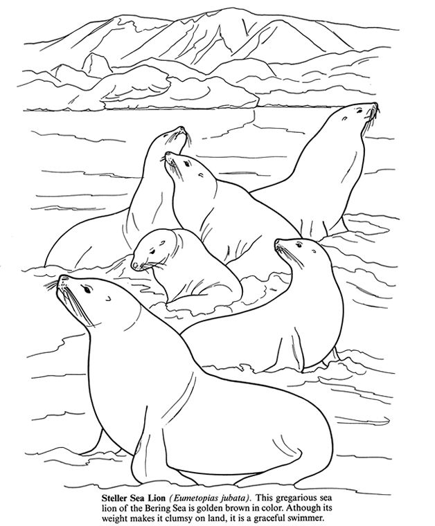 Coloring Pictures Animal Coloring Pages Coloring Pages Dolphin Coloring Pages
