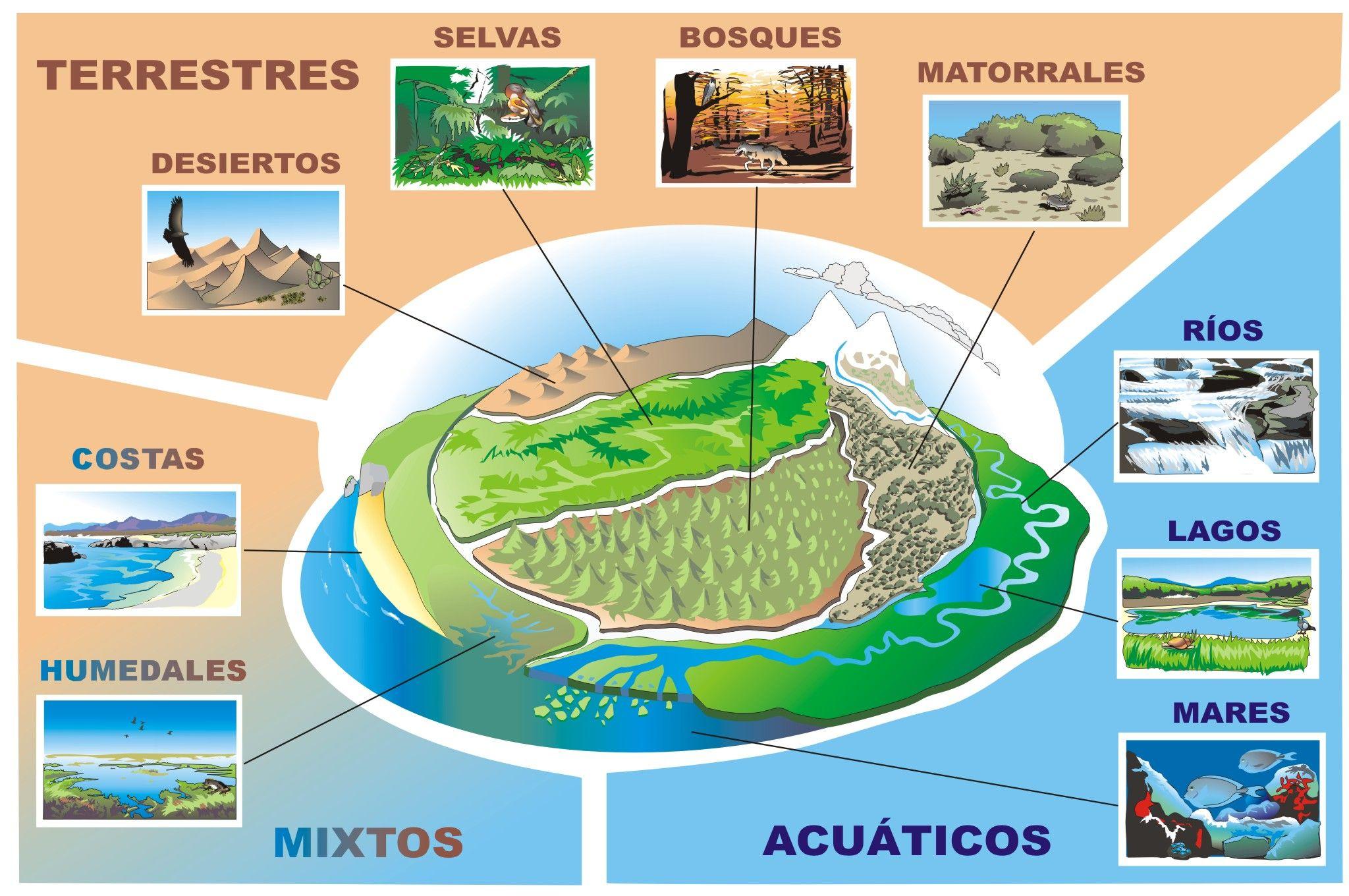 La Dinámica De Los Ecosistemas Es La Parte De La Ecología Que Estudia El Funcionamiento Y La Evolució Tipos De Ecosistemas Ecosistemas Proyectos De Ecosistemas
