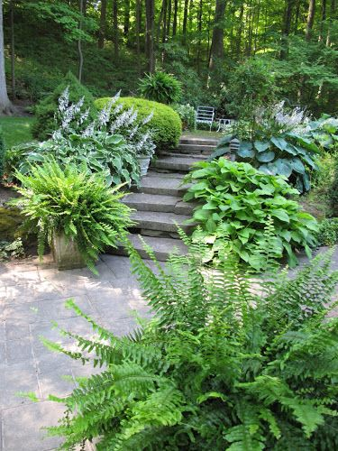 shade plants hostas & ferns