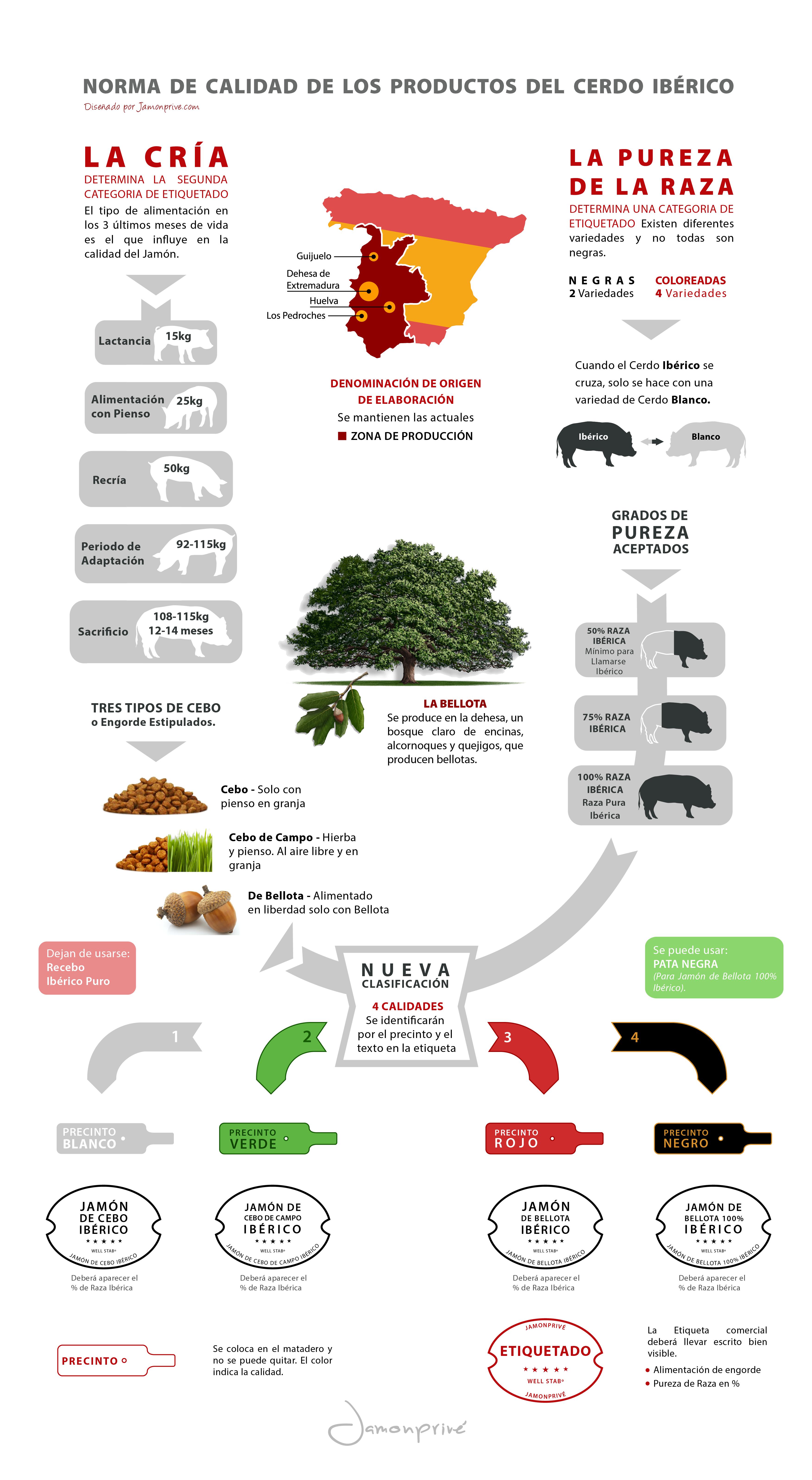 infografia del jamon - Buscar con Google