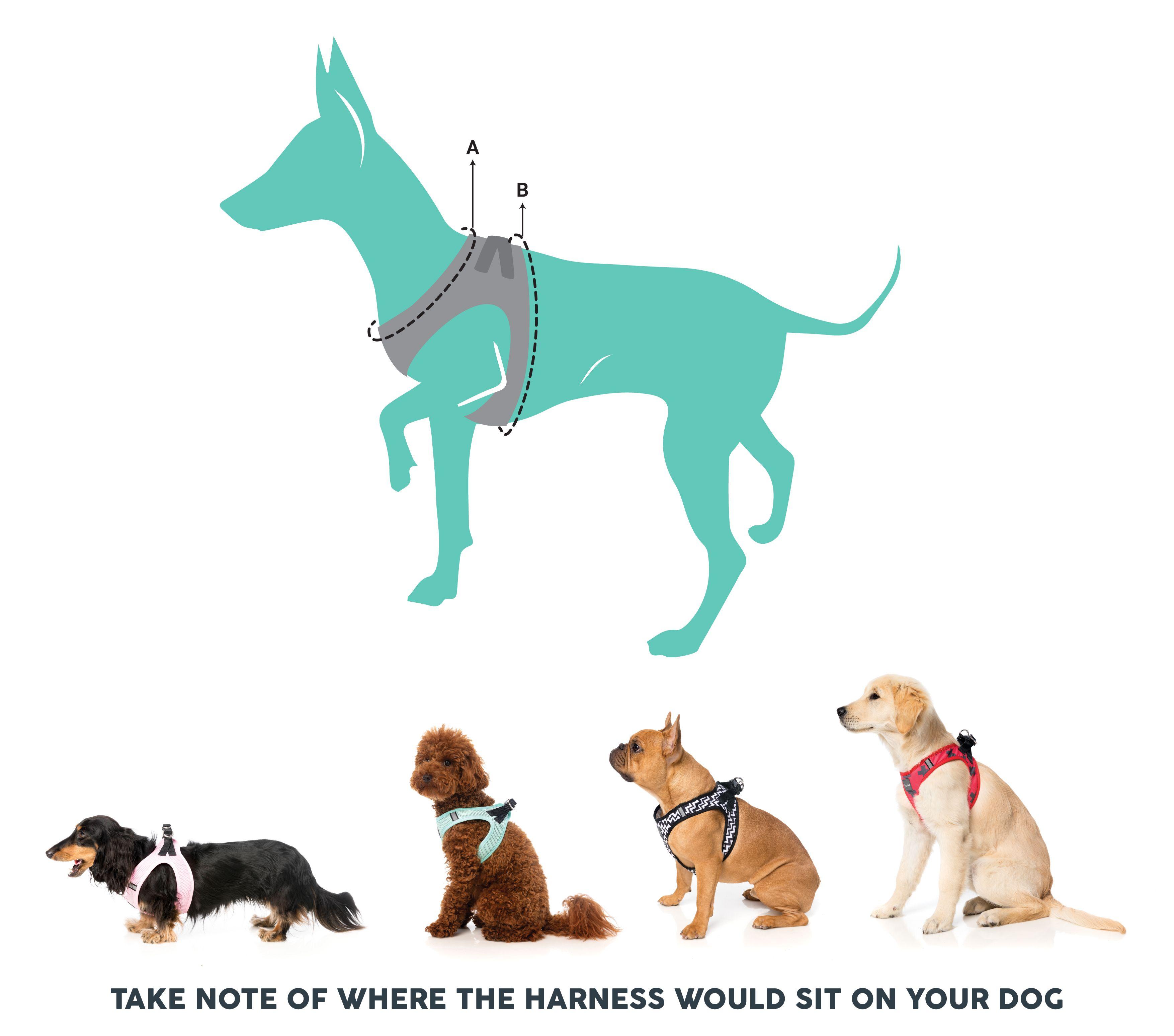 Mint Step In Harness Green Dog Harness Mini Pinscher Dog Steps