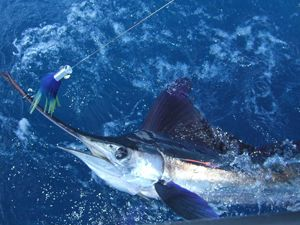 Sport Fishing Grenada Fishing Charters Best Deep Sea Fishing In