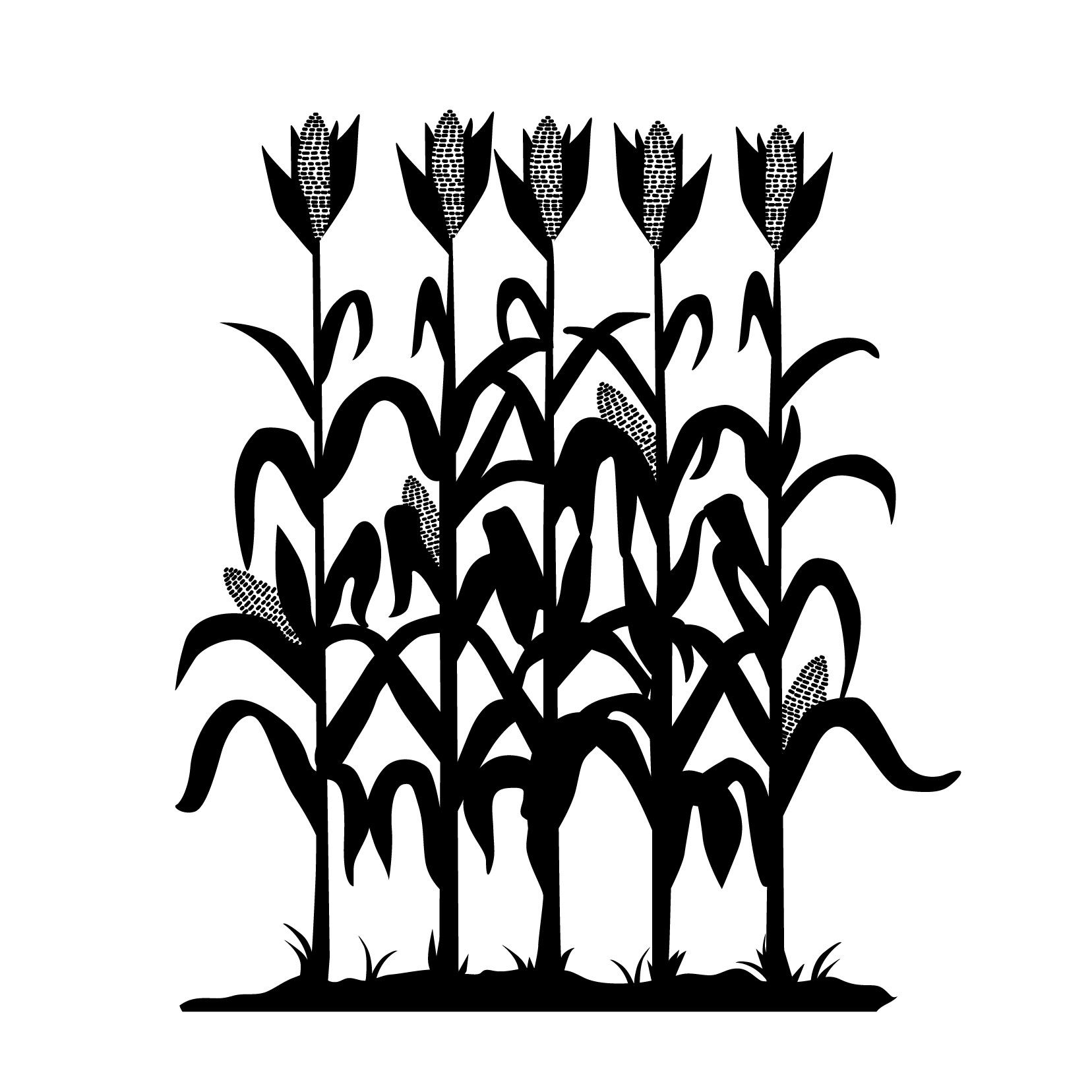 corn stalks illustration - Google Search | drama ...