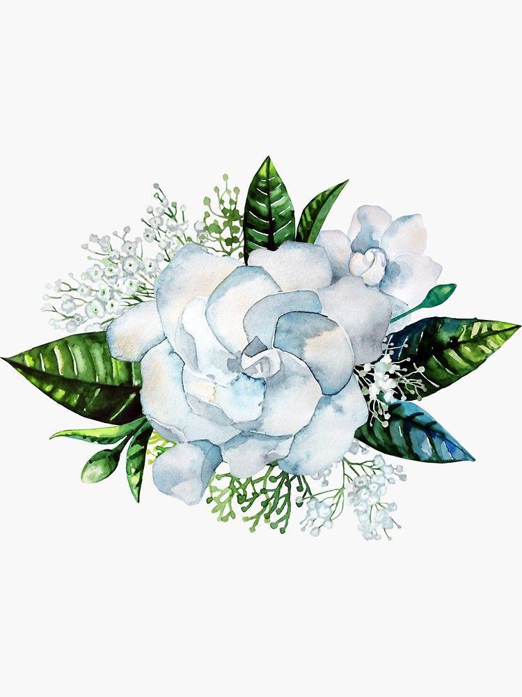 Watercolor Gardenia And Gypsophila Vignette Sticker By Glazkova Redbubble In 2020 Flower Art Garden Tattoos Gardenia