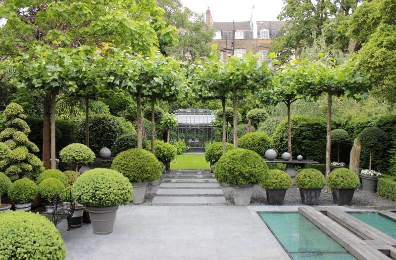 Garten mit modernem Design und Heckenpflanzen Box Pinterest - heckenpflanzen