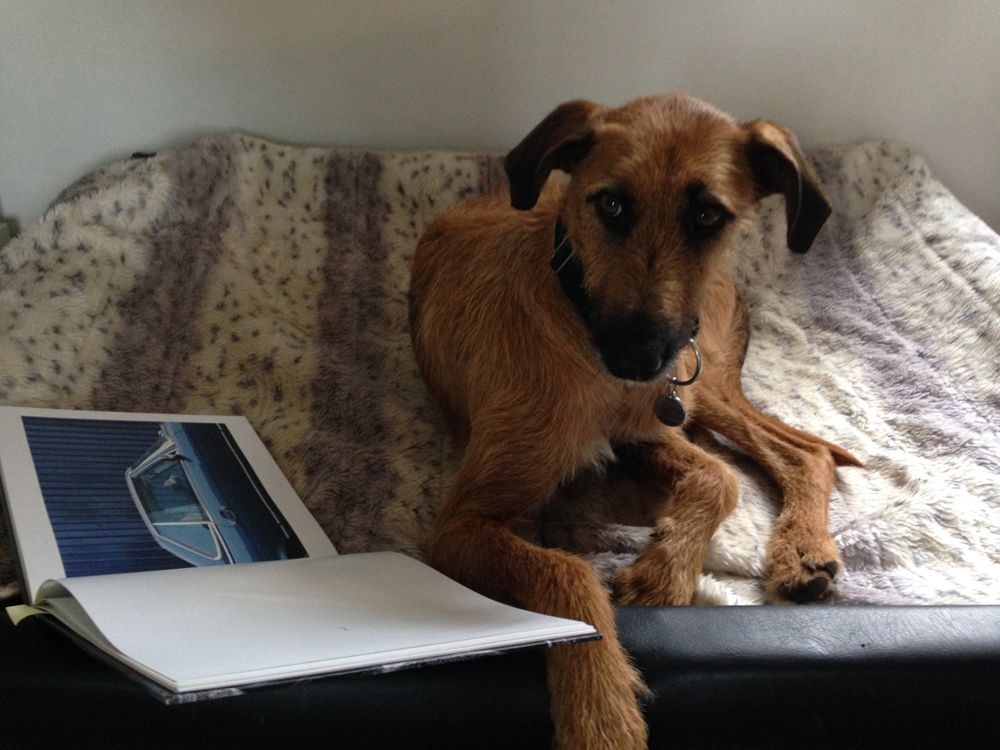 Welthundetag 2016 - Bürohund Nando