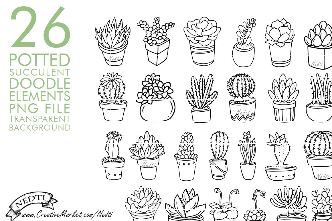 Potted Succulent Cactus Hand Drawn By Nedti On Creative