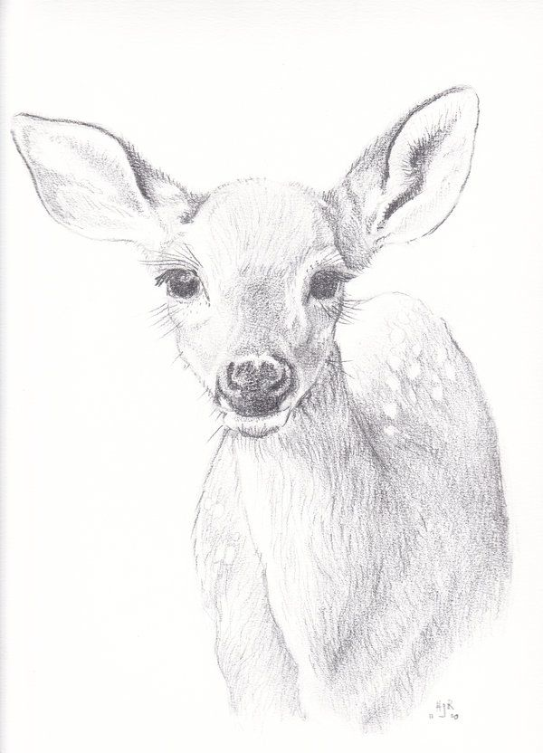 white tailed doe drawing google search