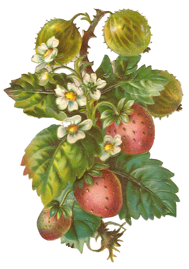 Free vintage berries clipart from Mammasaurus