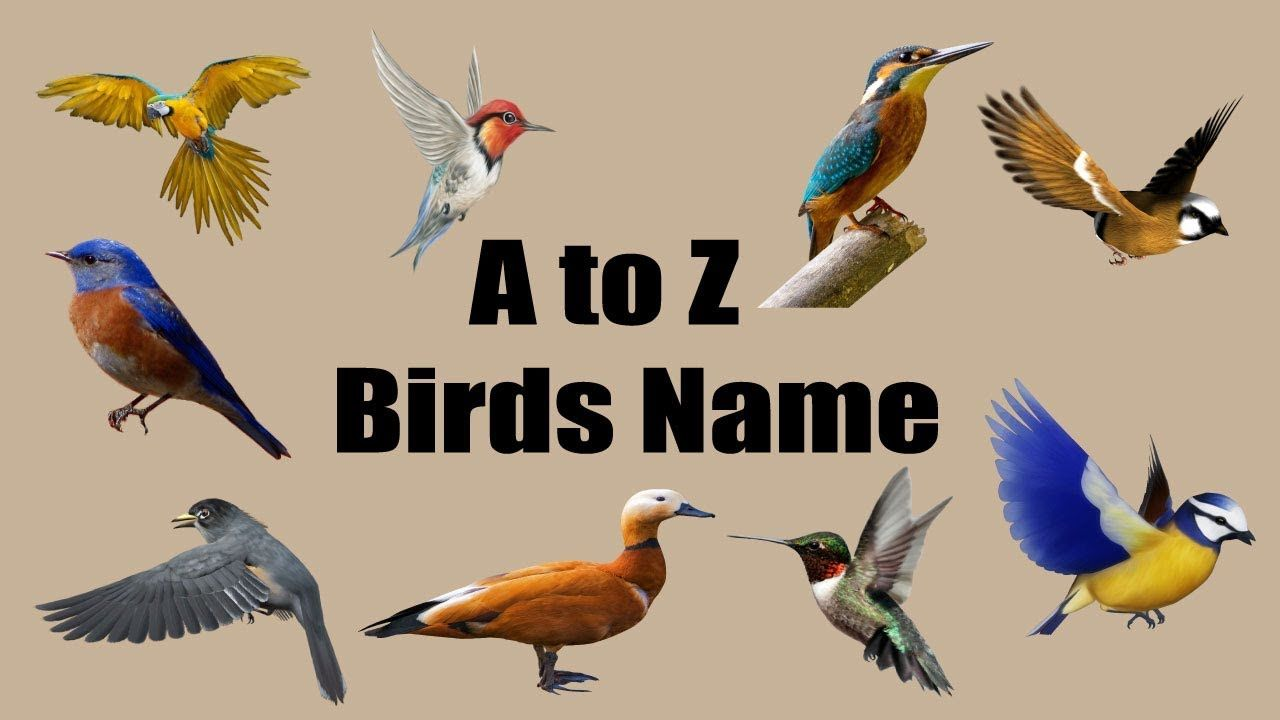 Birds Name Learning A To Z For Kids Bd Kids Birds Academic Poster Names