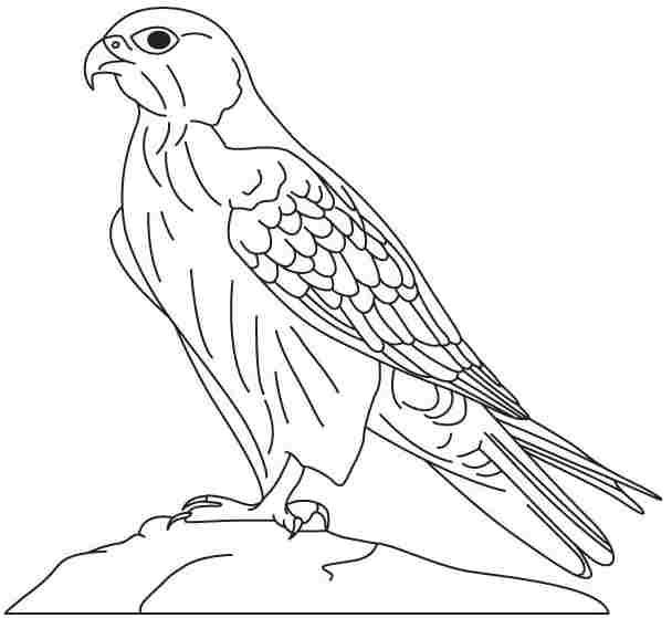 Printable Animal Hawk Saad ص Sakr Hawk صقر Bird Coloring Pages