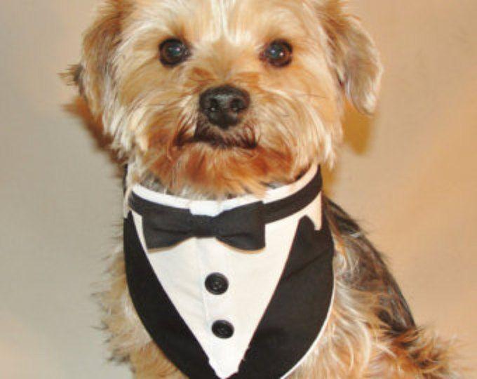 Small - Tuxedo Pet Bandana | Dog wedding attire and Bandanas