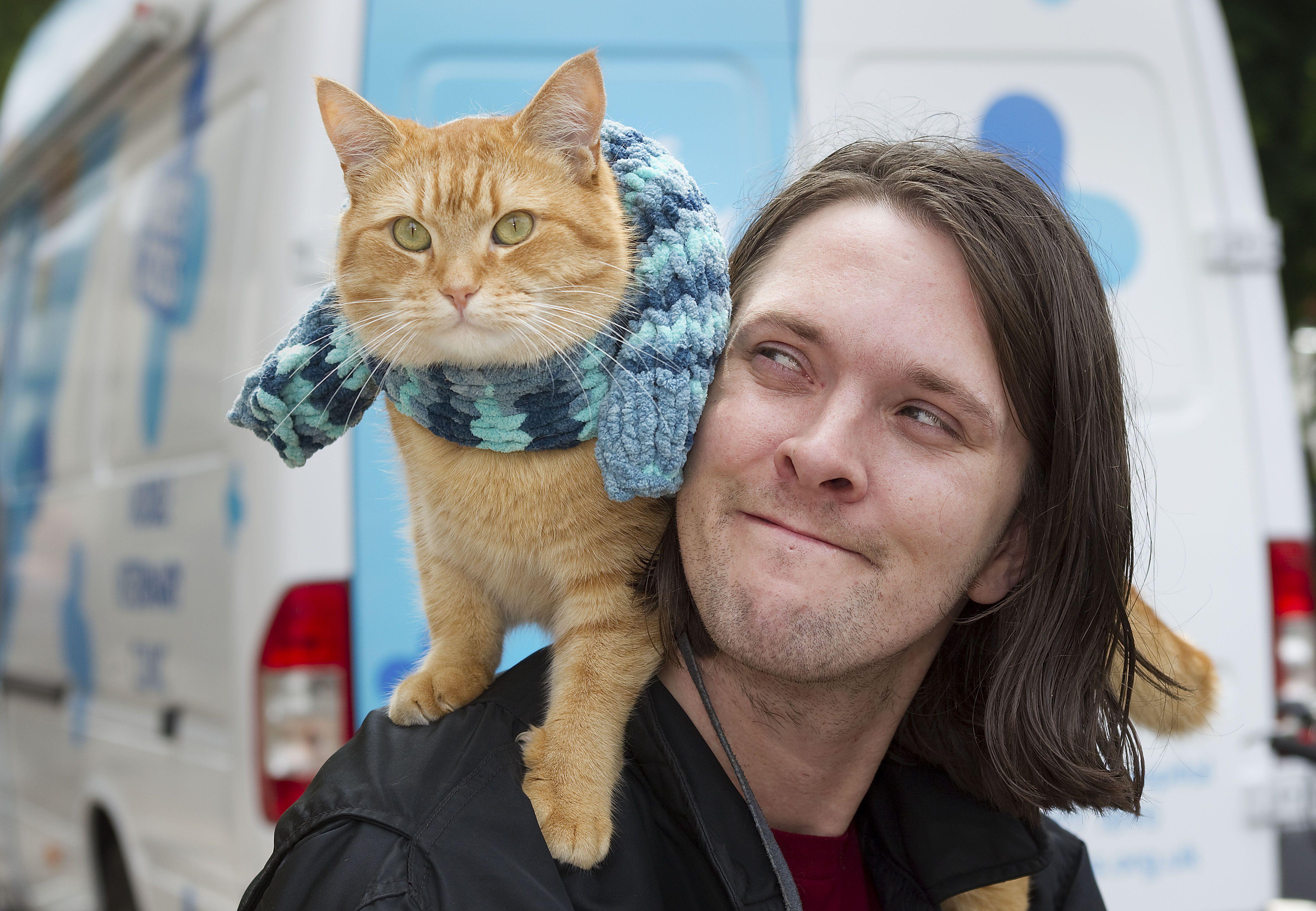 A street cat named Bob Cat names, Cats, Street cat bob