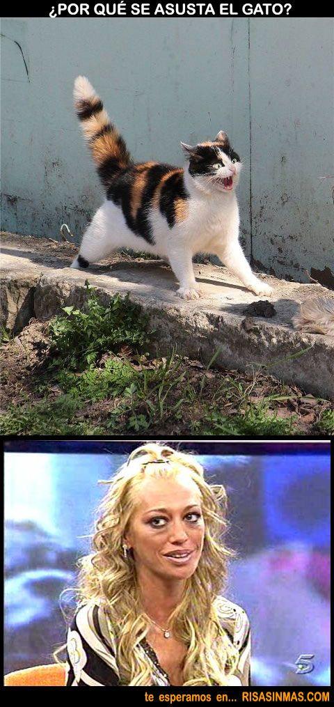 ¿Por qué se asusta el gato? | Risa Sin Más