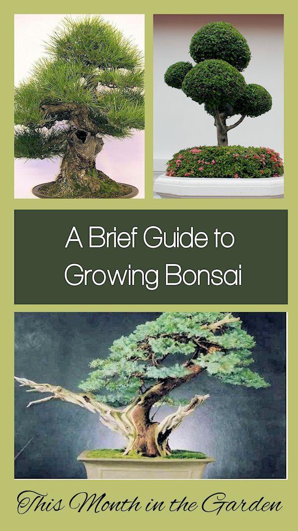 Dieser Monat im Garten: Ein kurzer Leitfaden zum Anbau und zur Pflege von Bonsai-Bäumen - İdeen baum #bonsaiplants
