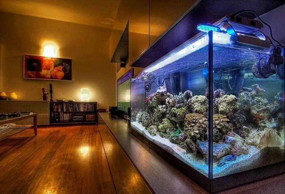 Marine Aquarium peceras Pinterest Peceras, Acuario y