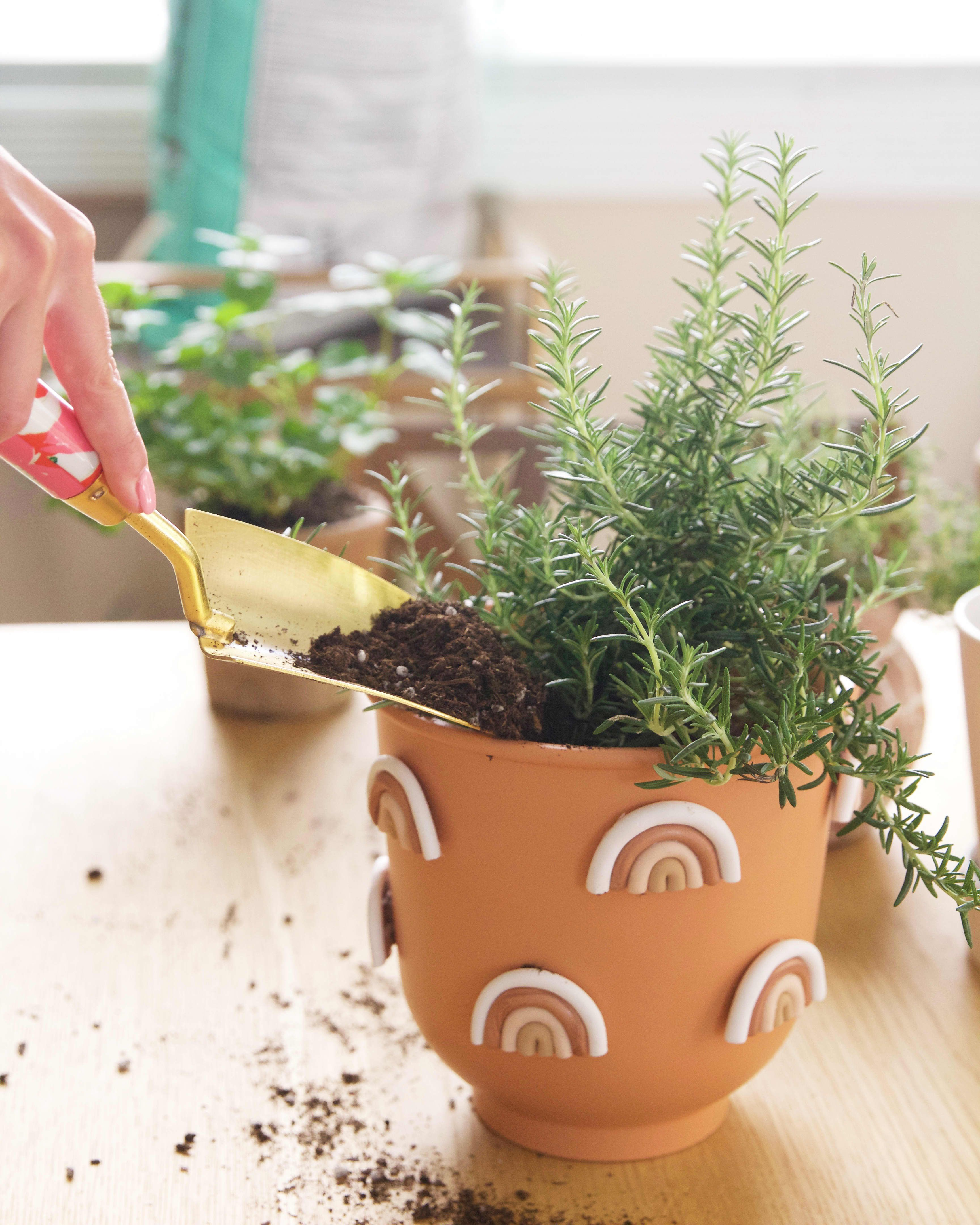 How To Grow Herbs Indoors Growing Herbs Indoors 400 x 300