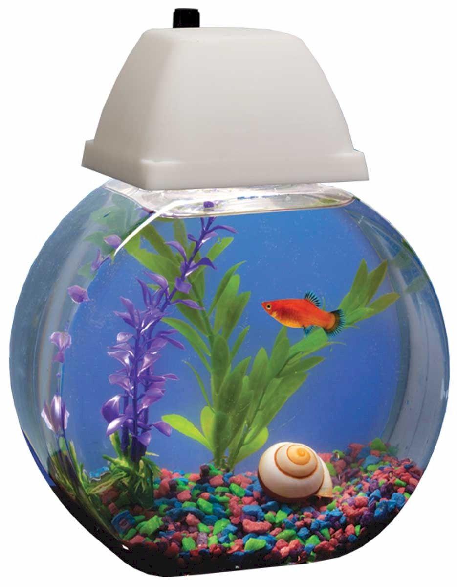 Freshwater aquarium fish capacity - Aqua Bowl Aquarium Fish Tank One Gallon Capacity
