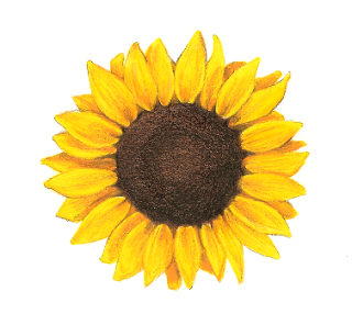 Sunflower Tattoos | Sunflower Tattoos.....