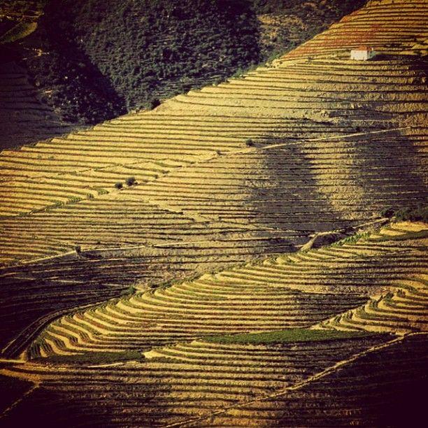 Muitos que apreciam um vinho Quinta da Pedra Alta não conhecem a tradicional região da qual ele procede. O Vale Douro é muito conhecido pela produção de Vinho do Porto, é digno de uma viagem repleta de requinte e com vistas paradisíacas.