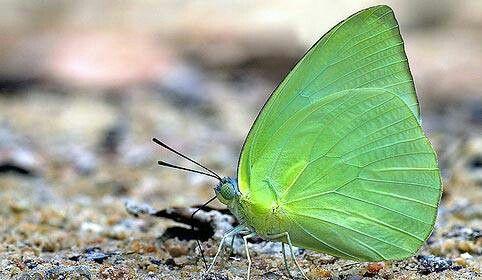 Pin Von Kim Friedrich Auf Butterflies Are Free To Fly The Sequel Mit Bildern