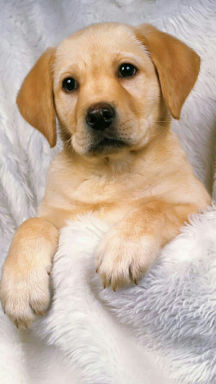 Dog Wallpapers Are Added Beautiful And Cute Dogs For Your Mobile Phone Follow Us On Facebook For More Beautiful Wall Dog Wallpaper Cute Dogs Cute Wallpapers