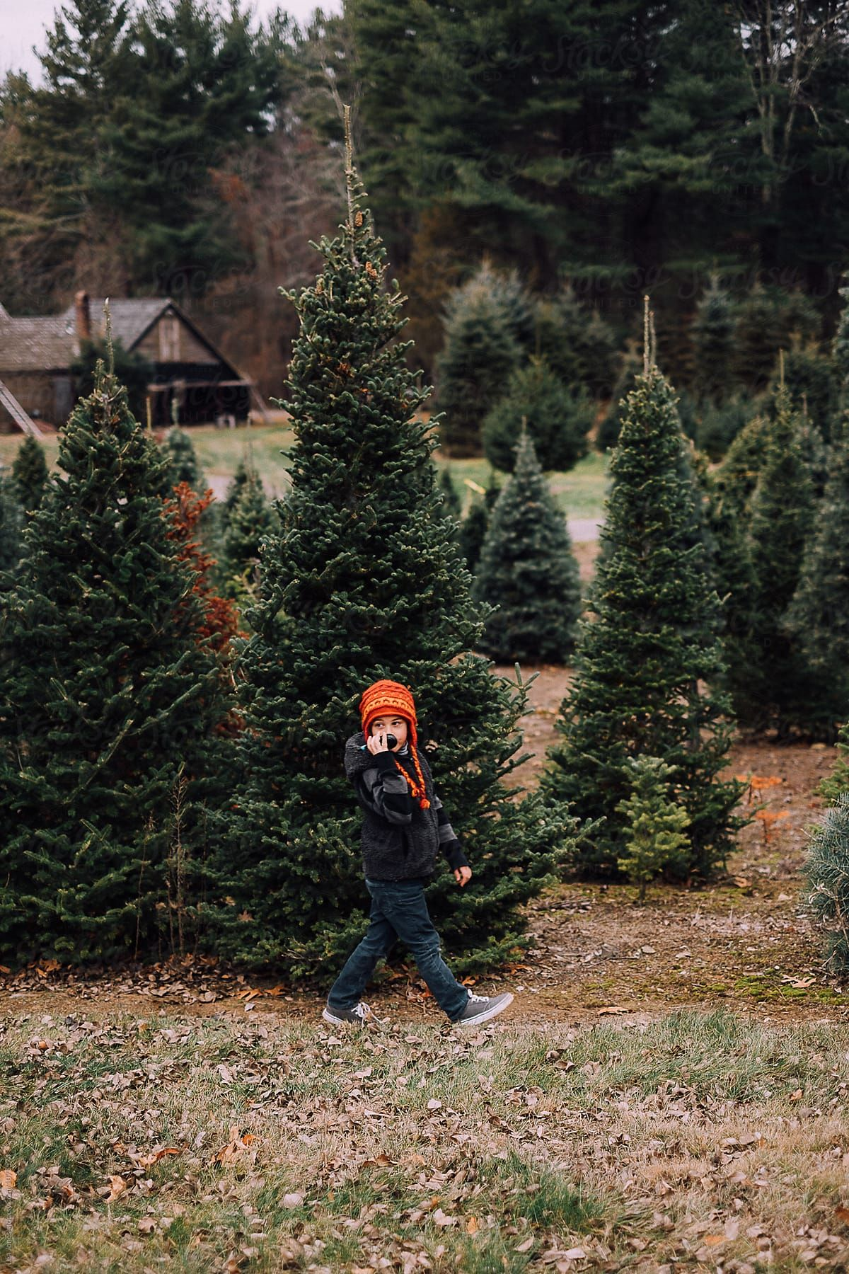 Stock Photo Of Child Walking In Christmas Tree Farm Stocksy United Tree Farms Christmas Tree Farm Tree