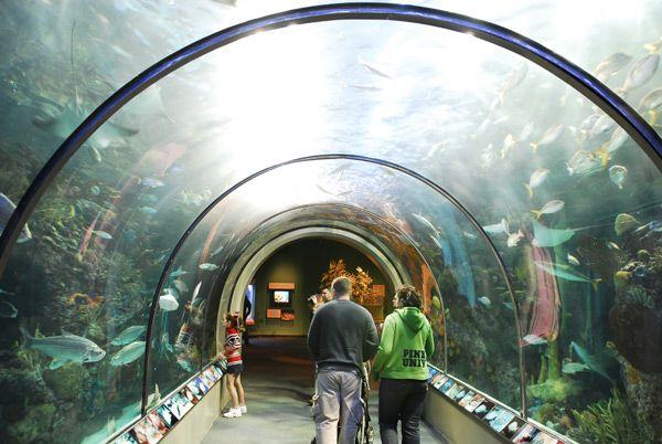 Aquarium of the Americas Review and Information   Audubon ...