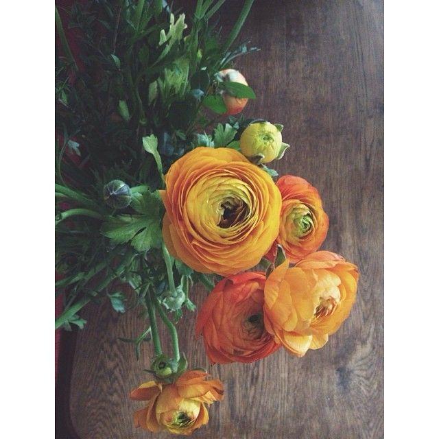 #orange #flowers
