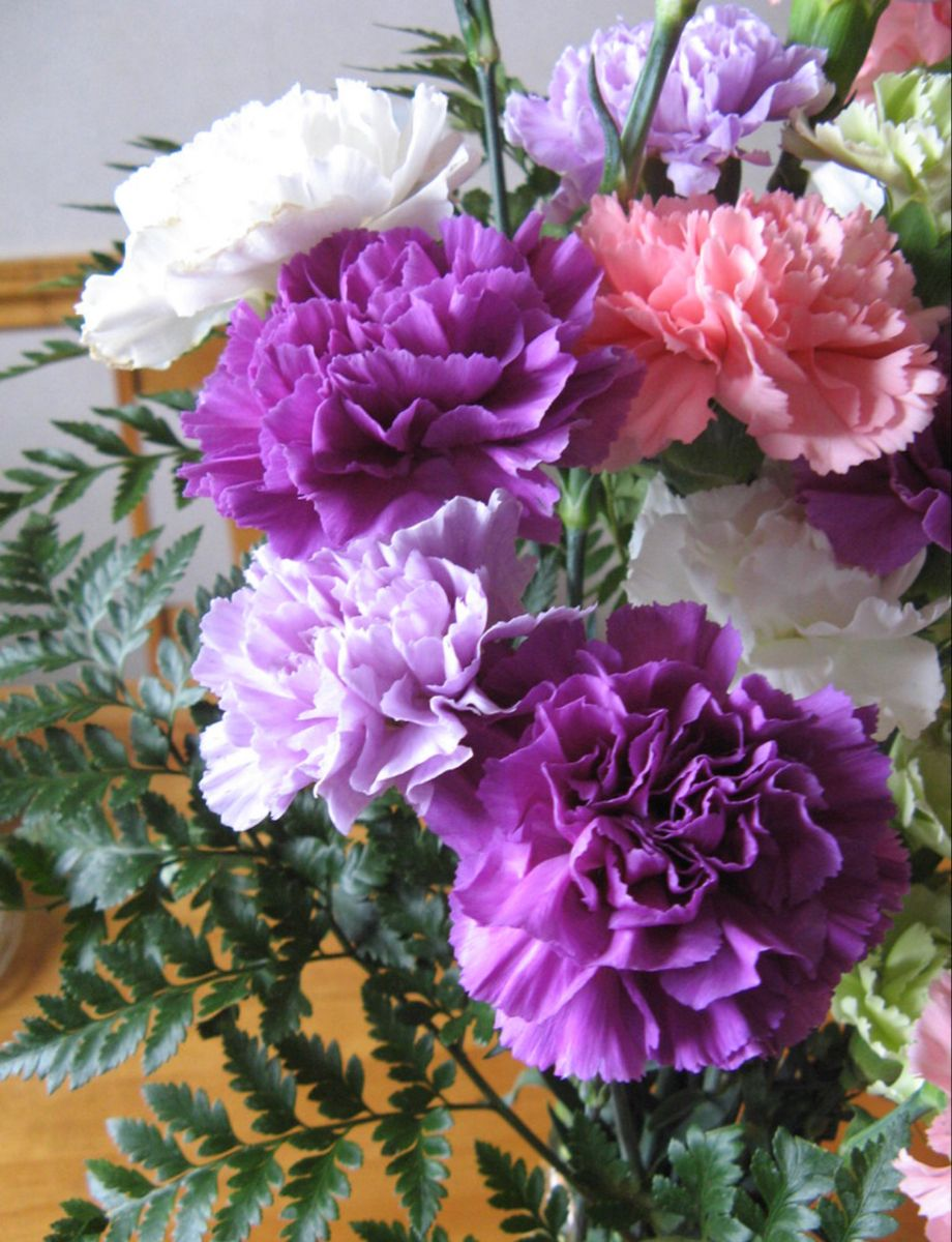 Carnation Flower In 2020 Carnation Flower Buy Flowers Online Flowers For Sale