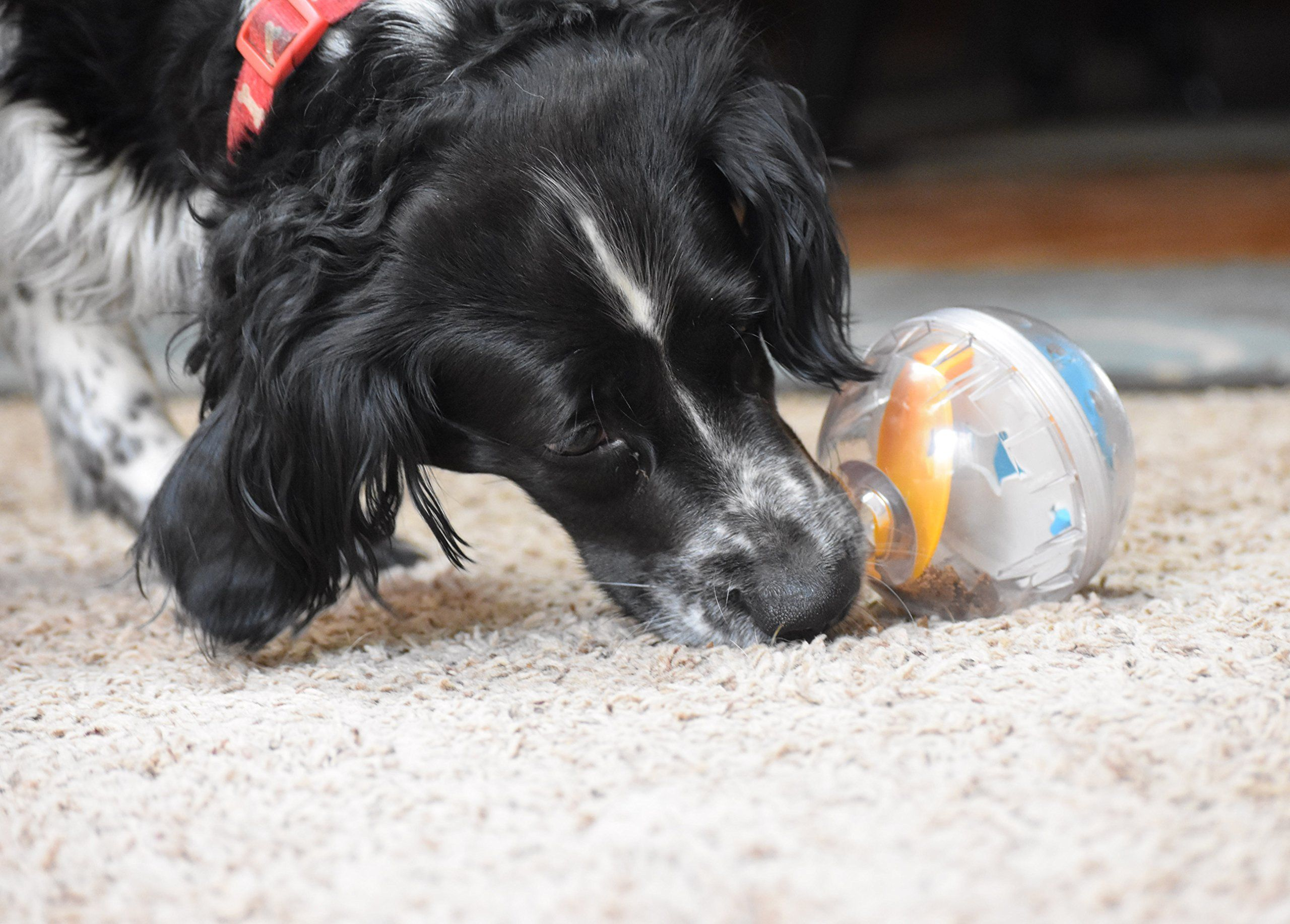Pet Zone Iq Treat Ball 4inch Be Sure To Check Out This Awesome