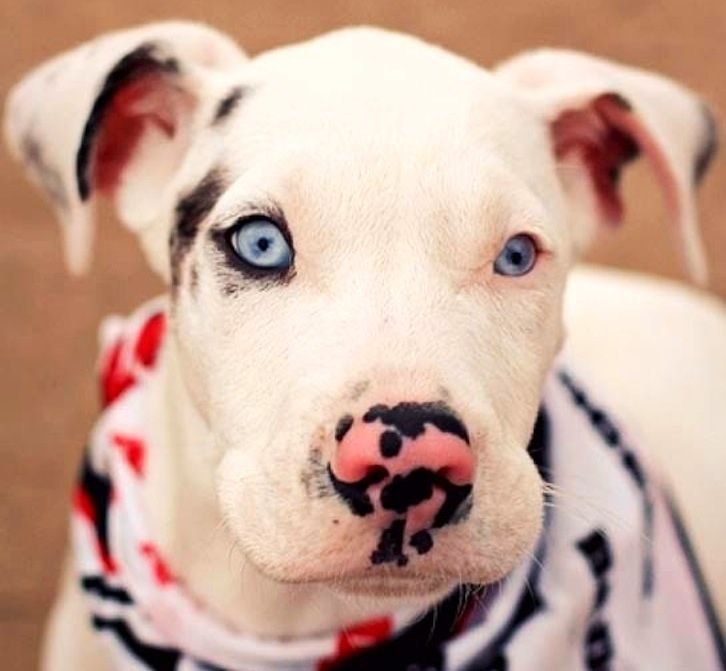 Dog Has One Blue Eye Complete With Eyeliner Unusual Dog Breeds