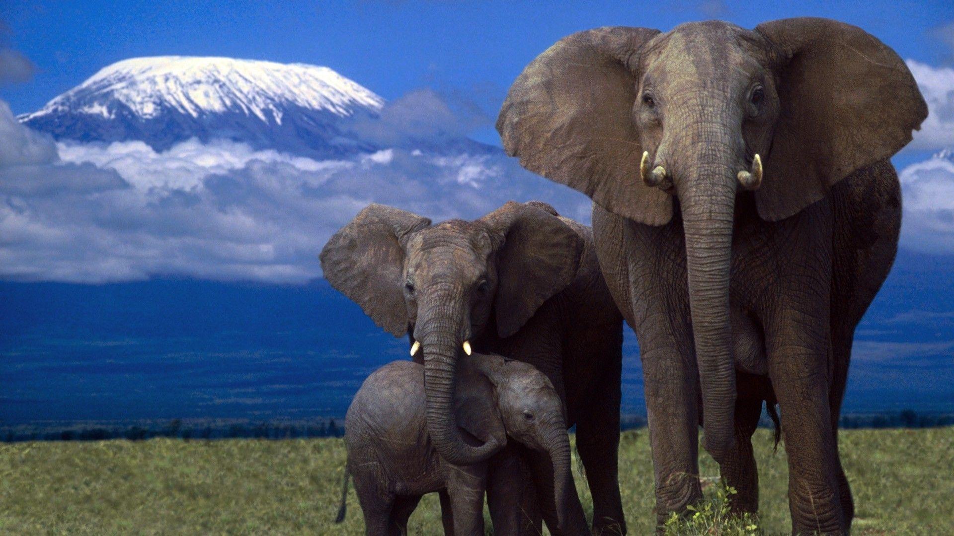 Fantastic Wallpaper High Quality Elephant - 27aa7eef6d482b4105132d35633b2d56  Snapshot_613690.jpg